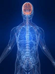 Highlighted image of nervous system in the human body